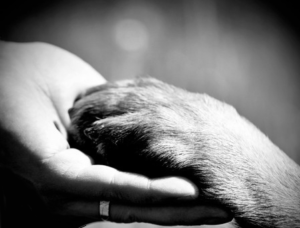 Pet Cremation vs Pet Burial